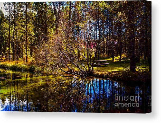 Nature Canvas Print featuring the photograph Reflections by Adam Reisman