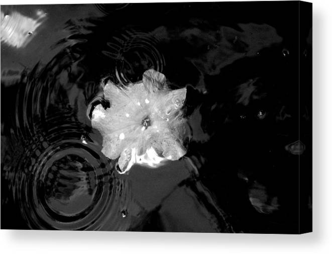 Flower Canvas Print featuring the photograph Ripples In Time by David Weeks