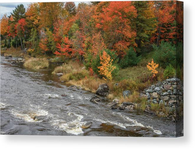 Maine Canvas Print featuring the photograph River Foliage by Jane Luxton
