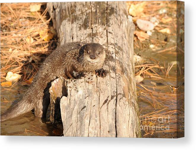 River Otter Canvas Print featuring the photograph River Otter by Dennis Hammer