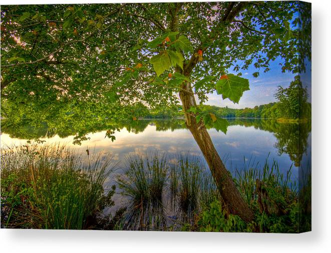 Nature Canvas Print featuring the photograph Robinwood by Ches Black