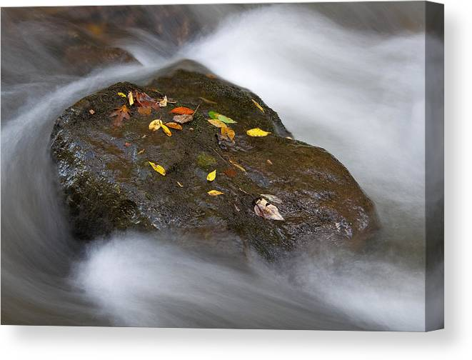 Rock Canvas Print featuring the photograph Rock In Water by Itai Minovitz