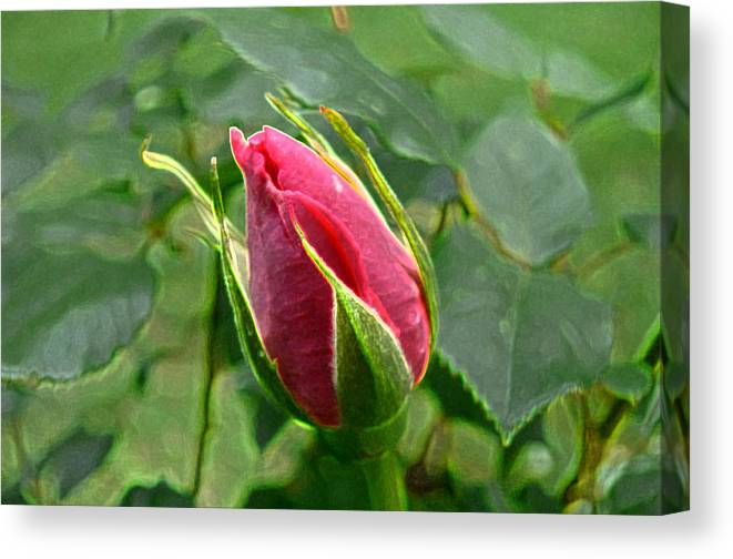 New England Photos Canvas Print featuring the photograph Rose Bud by Nancie DeMellia