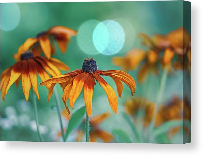 Flowers Canvas Print featuring the photograph Rudbeckia by Hanna Tor
