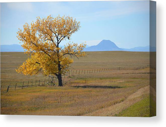 Cottonwood Canvas Print featuring the photograph Sacred Landscape by Darby Boyd