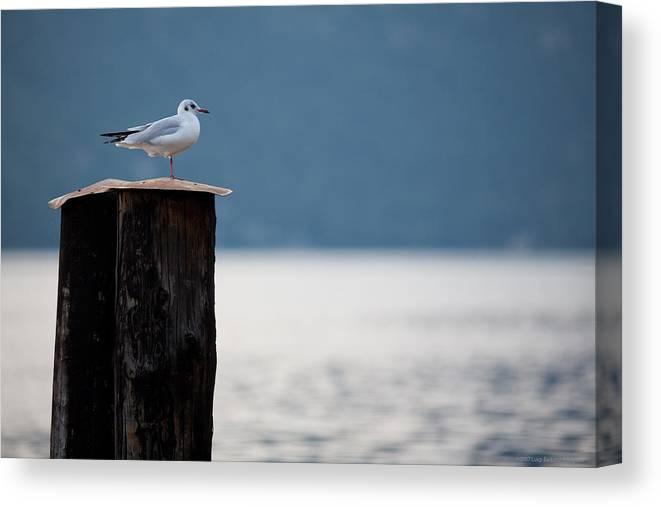 Italy Canvas Print featuring the photograph Seagull by Luigi Barbano BARBANO LLC