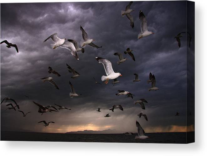 Gull Canvas Print featuring the photograph Seagull Storm by Gene Praag