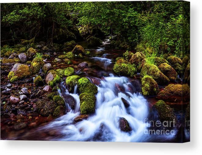 Streams Canvas Print featuring the photograph Secret Stream by Adam Reisman