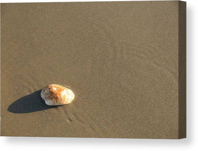 Beach Shell Sand Sea Ocean Canvas Print featuring the photograph Shell And Waves Part 1 by Alasdair Turner