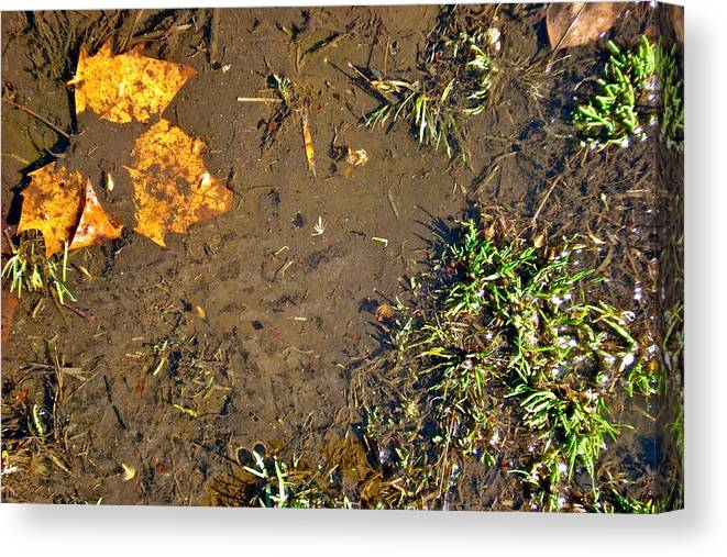 Autumn Leaves Canvas Print featuring the photograph Signs Of Autumn by Felix Zapata