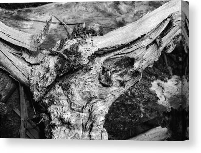 Wood Canvas Print featuring the photograph Skull by Donna Blackhall