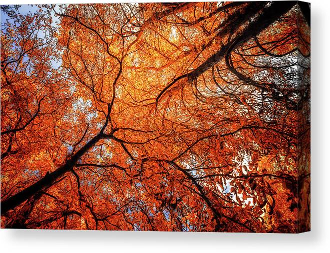Tree Art Canvas Print featuring the photograph Sky Roots In Forest Red by John Williams