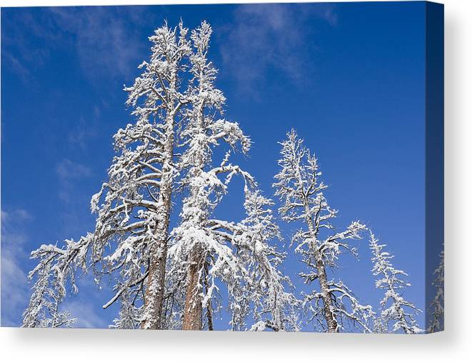Winter Canvas Print featuring the photograph Snow Covered by Kelley King