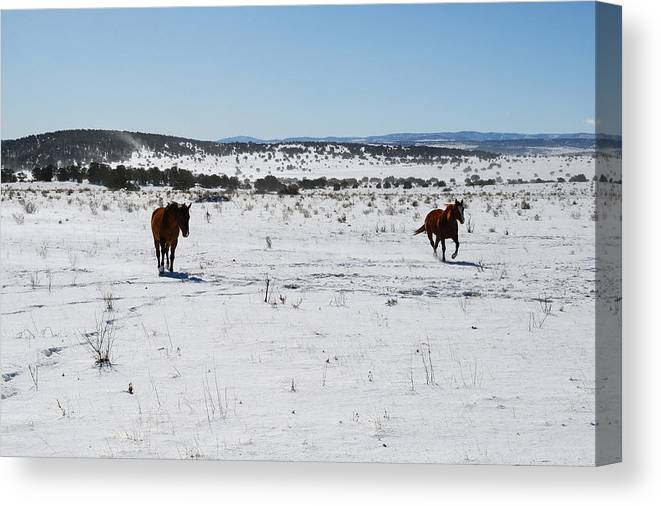 Snow Canvas Print featuring the photograph Snowplay by Jon Rossiter