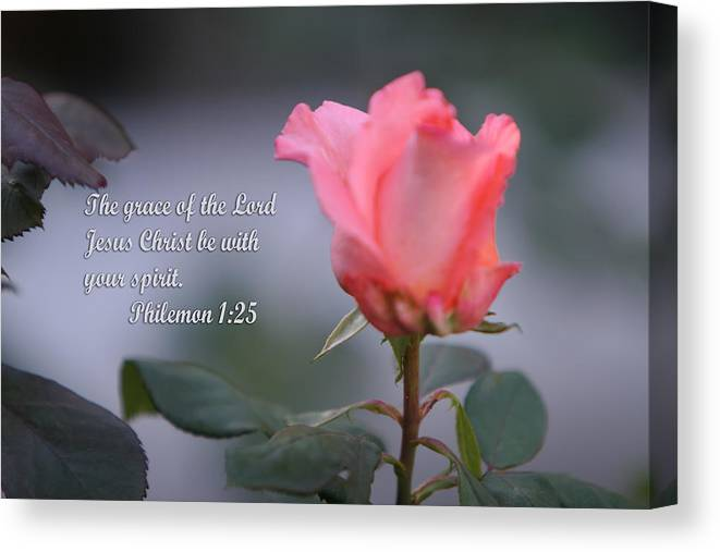 Scripture Canvas Print featuring the photograph Soft Pink Rose With Scripture by Linda Phelps