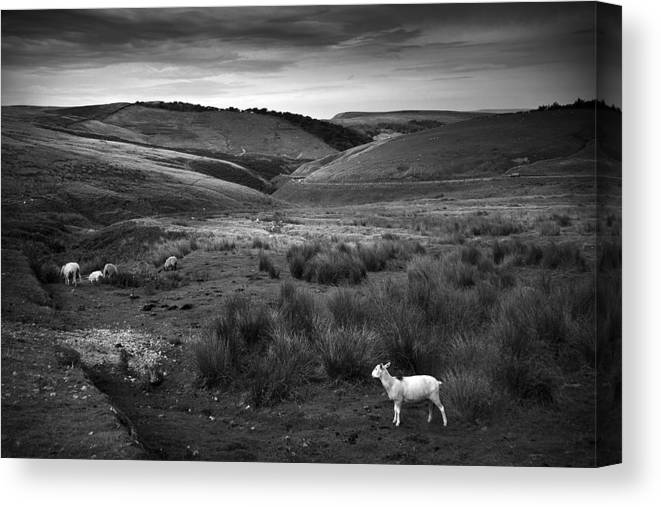 Peak District Canvas Print featuring the photograph Somewhere by Dorit Fuhg