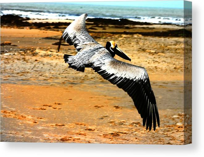 Brown Pelican Canvas Print featuring the photograph South Padre Pelican by Laurie Prentice
