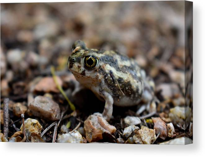 Toad Canvas Print featuring the photograph Spadefoot by Melisa Elliott