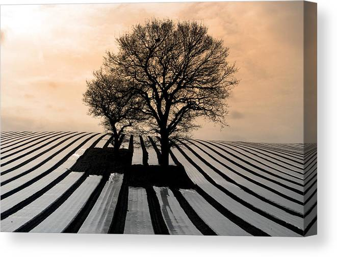 Photographer Canvas Print featuring the photograph Stripy Evening by Jez C Self