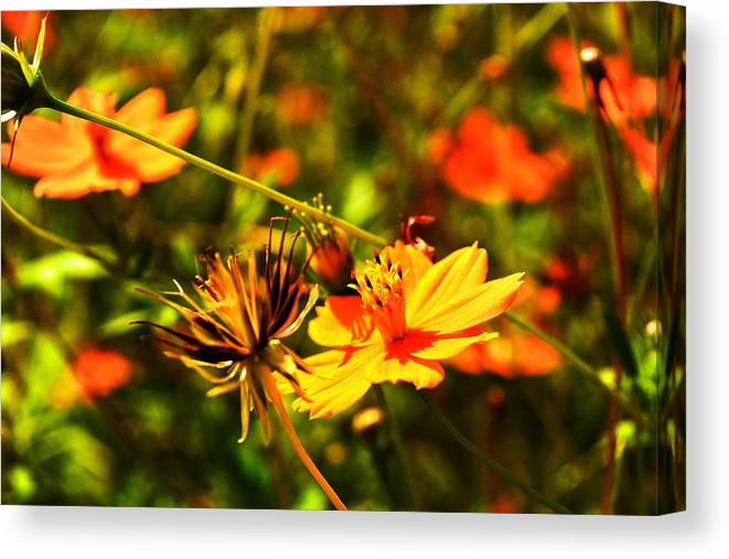 Field Canvas Print featuring the photograph Summer Field by Valerie Dauce