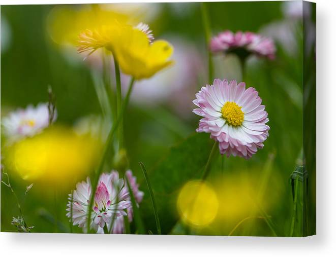 Flower Canvas Print featuring the photograph Summer by Peteris Vaivars