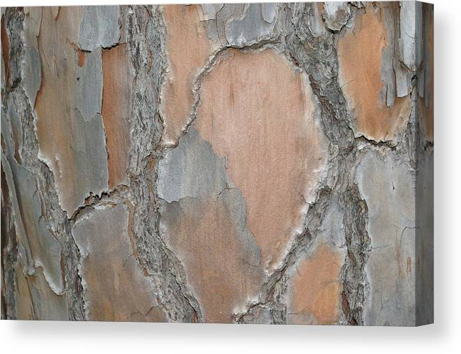 Wood Canvas Print featuring the photograph Texture by Veron Miller