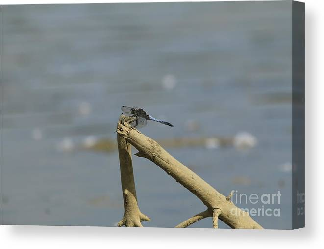 Sea Canvas Print featuring the photograph The Beauty Of An Dragonfly by Four Hands Art