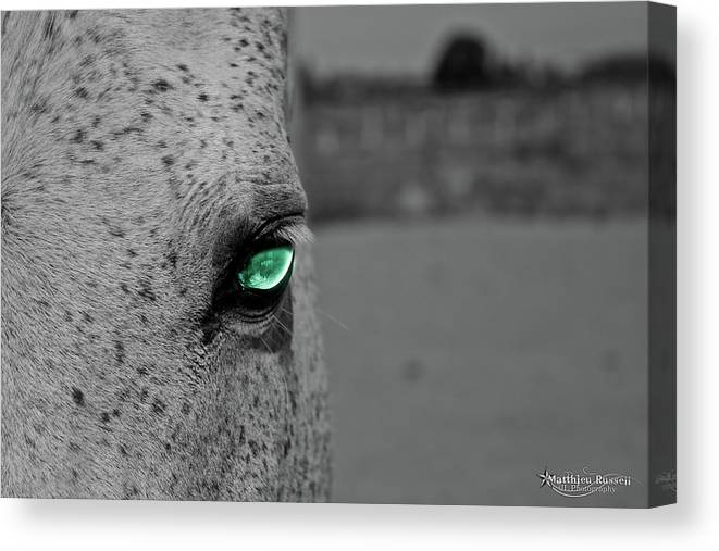Canvas Print featuring the photograph The Green Eyed Horse by Matthieu Russell