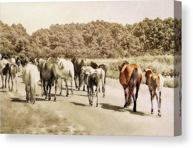 Horse Canvas Print featuring the photograph The Herd by JAMART Photography