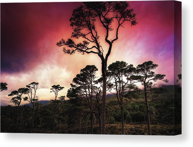 Europe Canvas Print featuring the photograph The Light Magic by Radek Spanninger