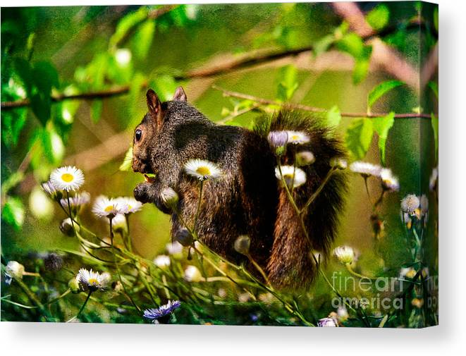 Squirrel Canvas Print featuring the photograph The Little Things by Lois Bryan