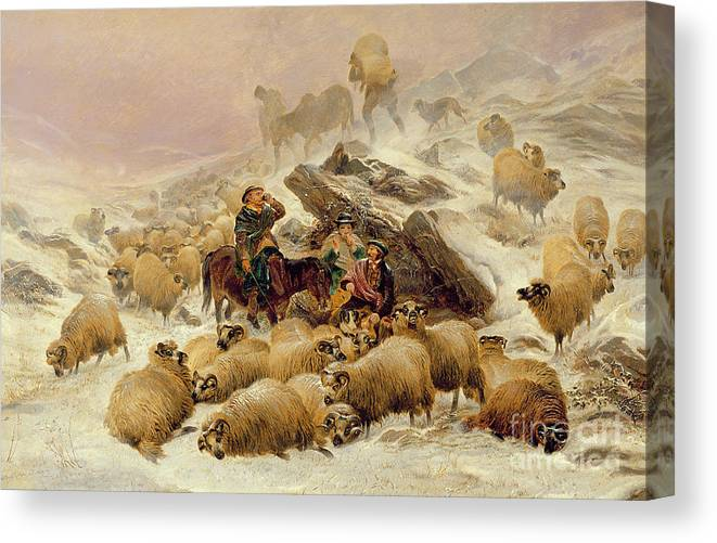 Sheep Canvas Print featuring the painting The Warmth Of A Wee Dram by TS Cooper