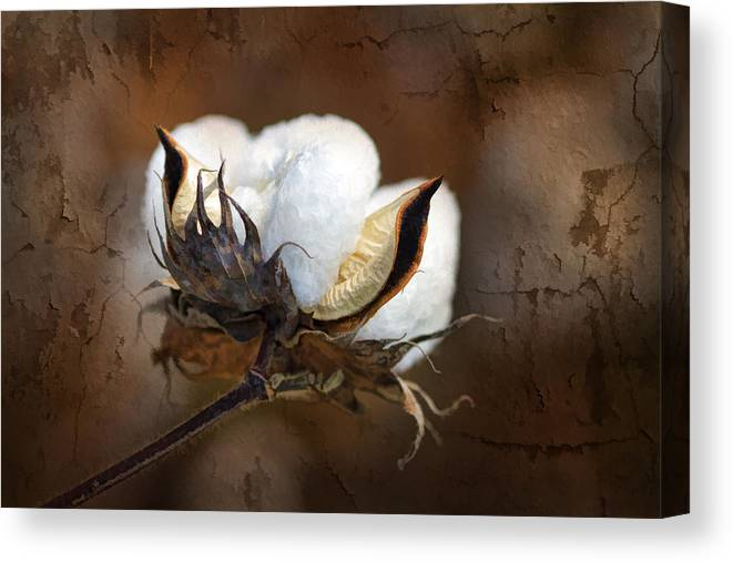 Cotton Canvas Print featuring the photograph Them Cotton Bolls by Kathy Clark