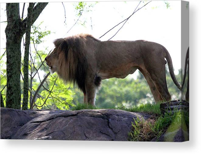 Animal Canvas Print featuring the photograph Theres Nothing Like A Good Roar To Start The Morning by Mary Haber