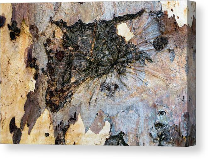Tree Bark Patterns Canvas Print featuring the photograph Tree Barks Pattern #13 by Robert VanDerWal