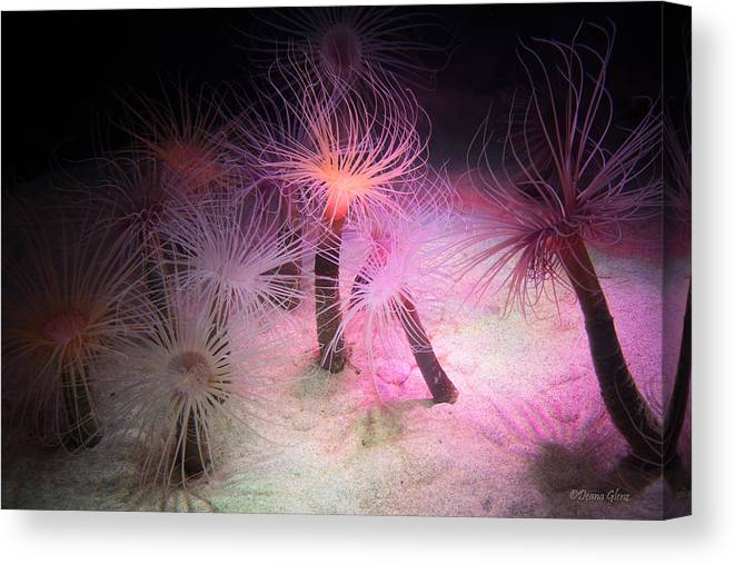 Pachycerianthus Canvas Print featuring the photograph Tube Anemone by Deana Glenz