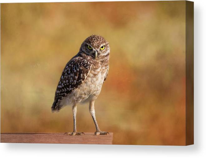 Owl Canvas Print featuring the photograph Under A Watchful Eye by Kim Hojnacki