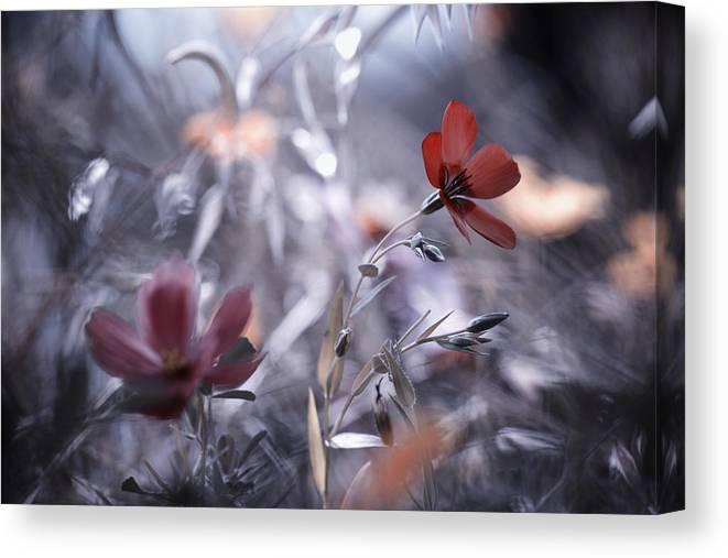 Flower Canvas Print featuring the photograph Une Fleur, Une Histoire by Fabien Bravin