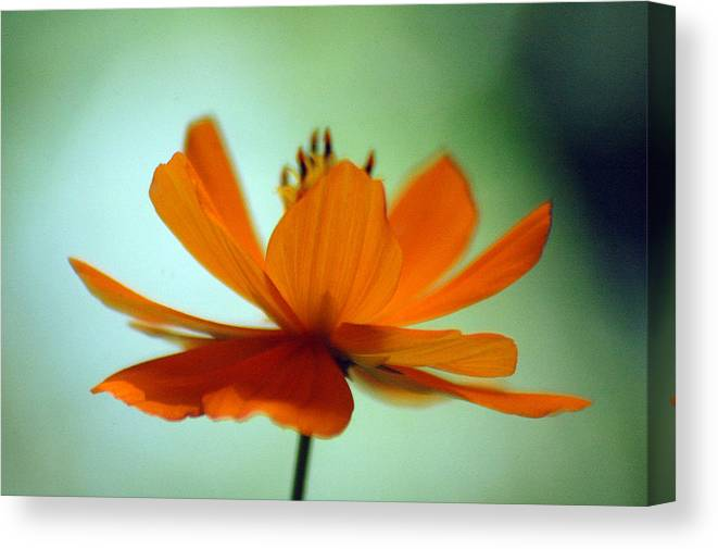 Flower Canvas Print featuring the photograph Untitled by Lucas Armstrong
