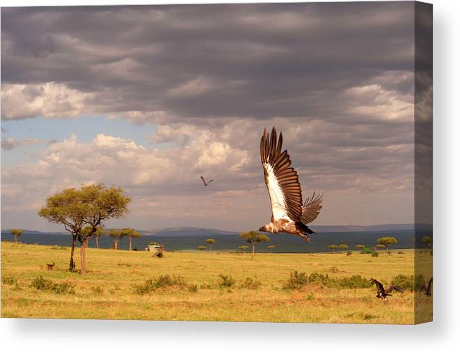 Kenya Canvas Print featuring the photograph Vulture On The Mara by Michael Morrissey