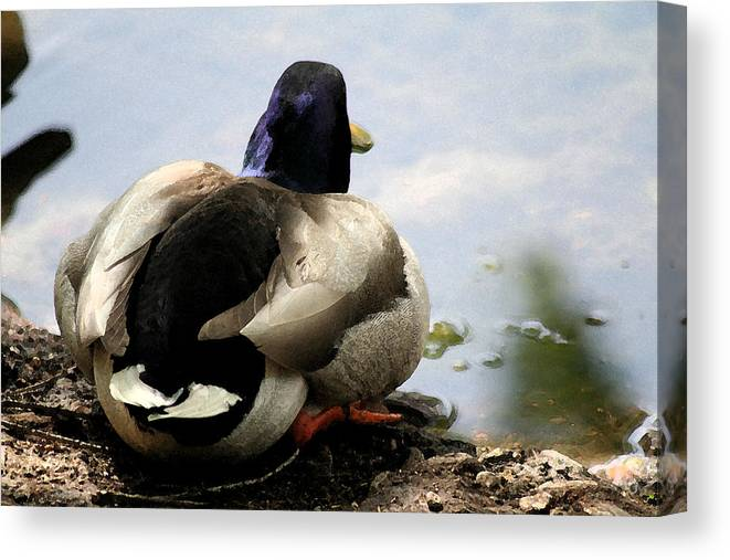 Duck Canvas Print featuring the painting Waiting by Diana Gonzalez