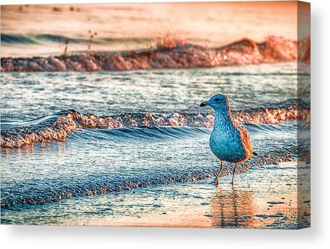 Ocean Canvas Print featuring the photograph Walking On Sunshine by Mathias Janke