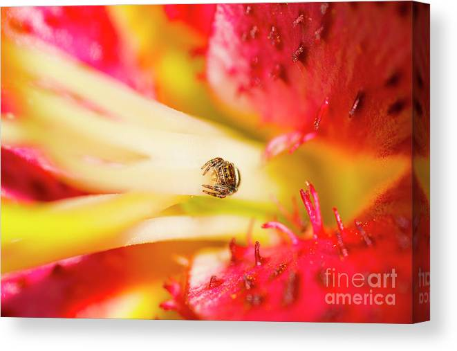 Tulip Canvas Print featuring the photograph Watching Me by Paul W Faust - Impressions of Light