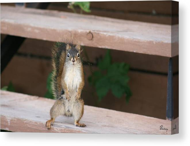 Squirrel Mother Nature Wild Animal Cute Dancing Canvas Print featuring the photograph What You Lookin At by Andrea Lawrence