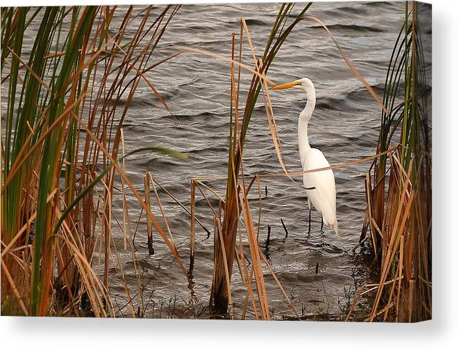 White Heron Canvas Print featuring the photograph White Heron by Mandy Wiltse