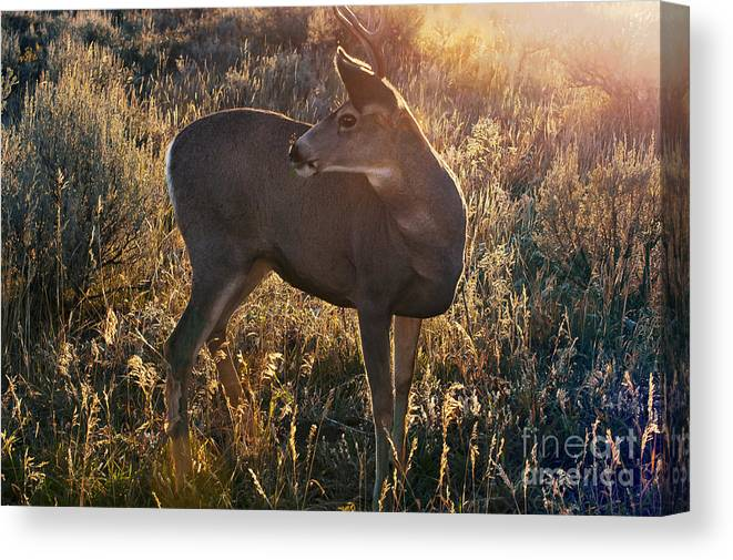 Jackson Hole Canvas Print featuring the photograph Who Is Back There by Bob Phillips