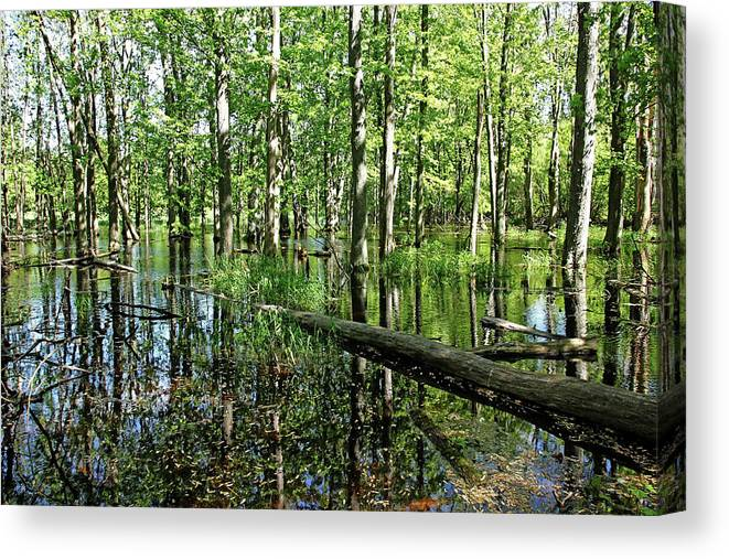 Guelph Canvas Print featuring the photograph Wild Goose Woods Pond II by Debbie Oppermann
