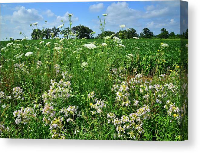 Mchenry County Canvas Print featuring the photograph Wildflowers Along Country Road In Mchenry County by Ray Mathis