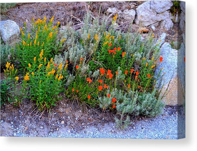 Wildflowers Canvas Print featuring the photograph Wildflowers by Carol Sheli Cantrell