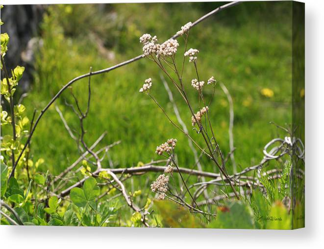 Wild Canvas Print featuring the photograph Wildflowers Marblehead Massachusetts by Michelle Constantine